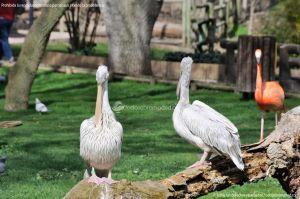 Foto Zoo Acuarium de Madrid 15