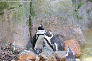 Foto Zoo Acuarium de Madrid 39