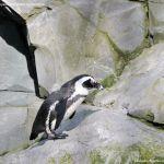 Foto Zoo Acuarium de Madrid 40