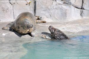 Foto Zoo Acuarium de Madrid 65