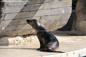 Foto Zoo Acuarium de Madrid 71