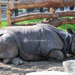 Foto Zoo Acuarium de Madrid 79