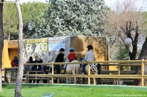 Foto Zoo Acuarium de Madrid 84