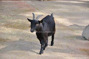 Foto Zoo Acuarium de Madrid 86
