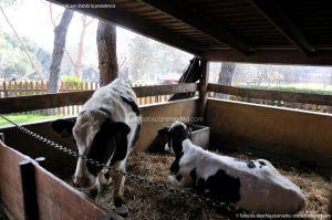 Foto Zoo Acuarium de Madrid 90