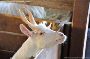 Foto Zoo Acuarium de Madrid 91