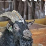 Foto Zoo Acuarium de Madrid 93