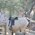 Foto Zoo Acuarium de Madrid 94