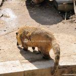 Foto Zoo Acuarium de Madrid 96