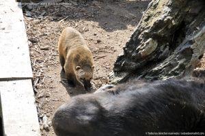 Foto Zoo Acuarium de Madrid 101