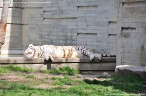 Foto Zoo Acuarium de Madrid 106
