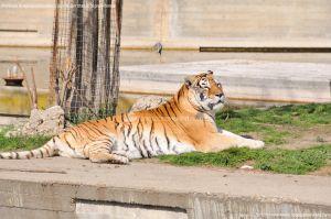 Foto Zoo Acuarium de Madrid 109
