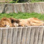 Foto Zoo Acuarium de Madrid 120
