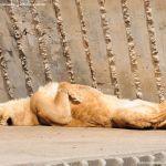 Foto Zoo Acuarium de Madrid 132