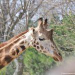 Foto Zoo Acuarium de Madrid 136
