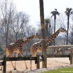 Foto Zoo Acuarium de Madrid 149