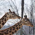 Foto Zoo Acuarium de Madrid 150
