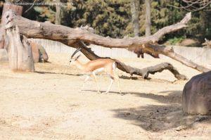 Foto Zoo Acuarium de Madrid 151