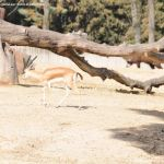 Foto Zoo Acuarium de Madrid 152