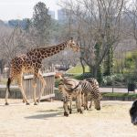 Foto Zoo Acuarium de Madrid 157