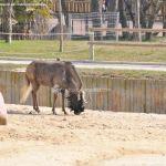 Foto Zoo Acuarium de Madrid 158