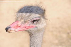 Foto Zoo Acuarium de Madrid 174