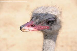 Foto Zoo Acuarium de Madrid 175