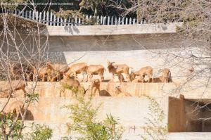 Foto Zoo Acuarium de Madrid 176