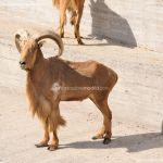 Foto Zoo Acuarium de Madrid 179