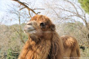 Foto Zoo Acuarium de Madrid 180