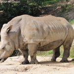 Foto Zoo Acuarium de Madrid 185
