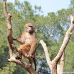 Foto Zoo Acuarium de Madrid 190