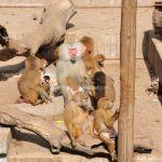 Foto Zoo Acuarium de Madrid 197