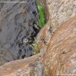 Foto Araña en el Río Aceña 1