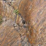 Foto Araña en el Río Aceña 2