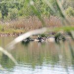 Foto Lagunas de El Porcal 6