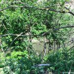 Foto Río Jarama en el Parque Regional del Sureste 2