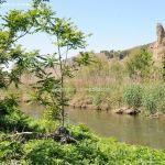 Foto Río Jarama en el Parque Regional del Sureste 8