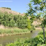 Foto Río Jarama en el Parque Regional del Sureste 10