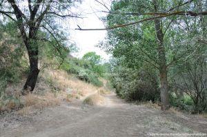 Foto Ruta por el Área Recreativa del Retamar 7