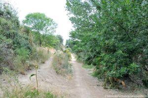 Foto Ruta por el Área Recreativa del Retamar 8