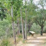 Foto Ruta por el Área Recreativa del Retamar 12