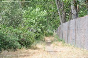 Foto Ruta por el Área Recreativa del Retamar 13
