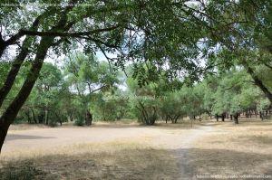 Foto Senda por el Área Recreativa de El Sotillo 2
