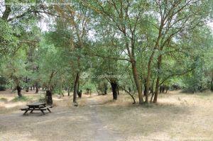 Foto Senda por el Área Recreativa de El Sotillo 3
