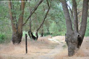 Foto Senda por el Área Recreativa de El Sotillo 19