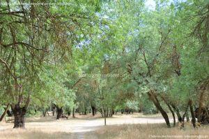 Foto Senda por el Área Recreativa de El Sotillo 31