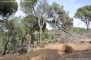 Foto Camino de Acceso a Lancha del Yelmo 3