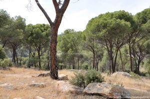 Foto Camino de Acceso a Lancha del Yelmo 10