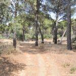 Foto Camino de Acceso a Lancha del Yelmo 14